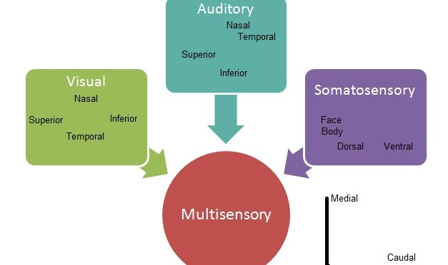 Historical concepts, treatment strategies and clinical experiences in three patients with SSADH deficiency