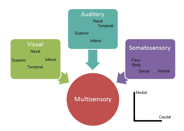 four levels of language structure and processing